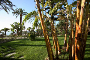 hotel con parco tropicale nella riviera dei fiori - hotels with park in san remo book a relaxing stay